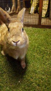Photo of Harry Brown rabbit