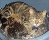 cat and kittens picture
